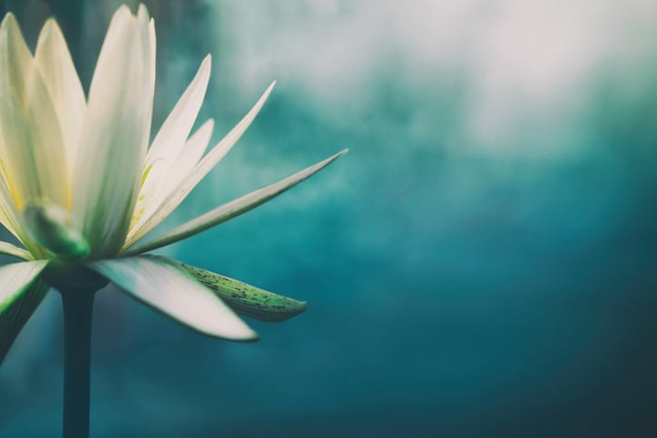 Mindfulness-Daily-Life